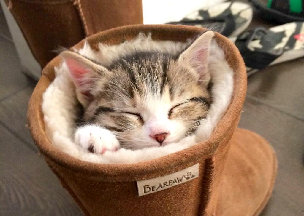 gattino.jpg