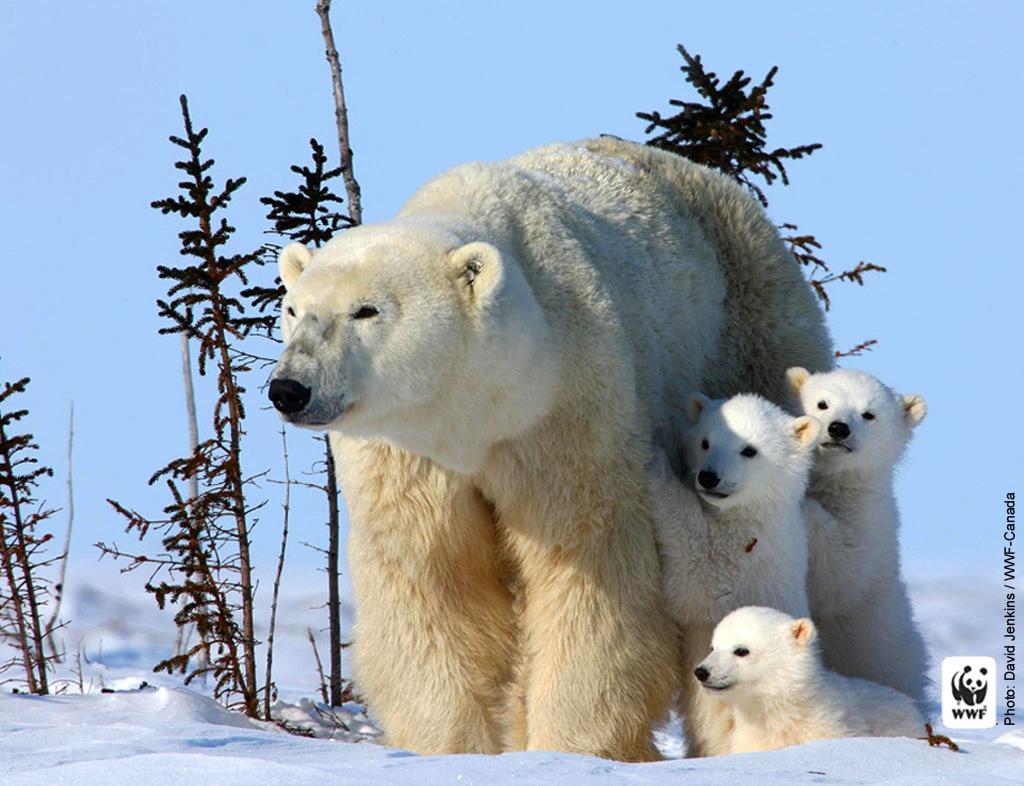 orso-polare.jpg