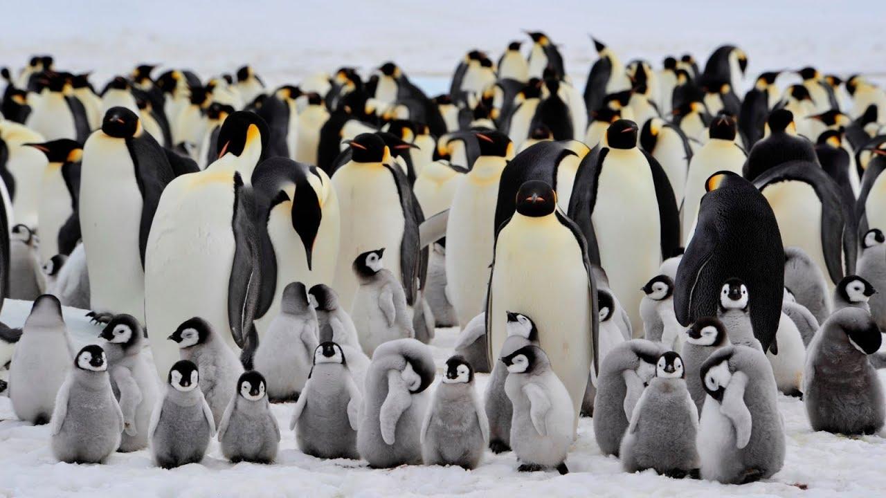 pinguini_Vittoria-Martina.jpg