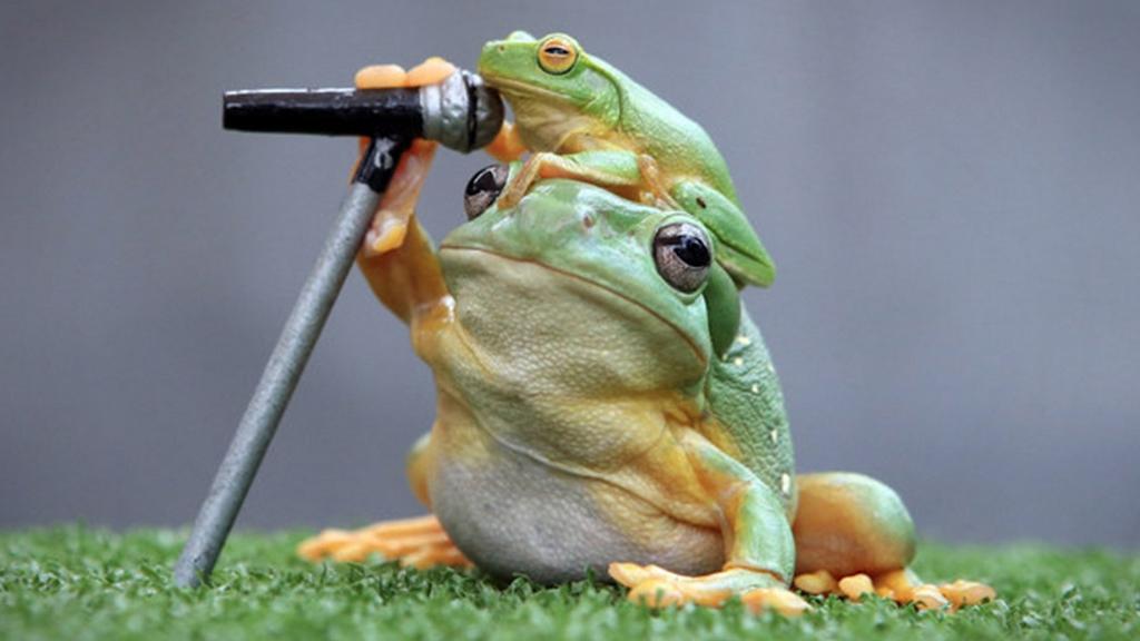 rana-cantante.jpg