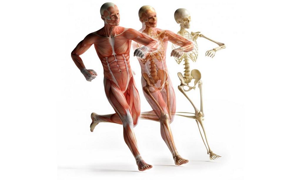 biomeccanica-del-corpo-umano.jpg