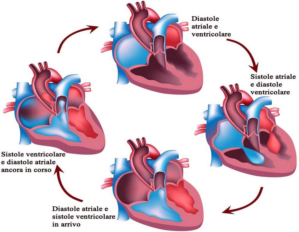 ciclo-cardiaco1.jpg