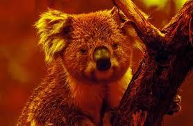 koala-rebecca-e-hima.jpg