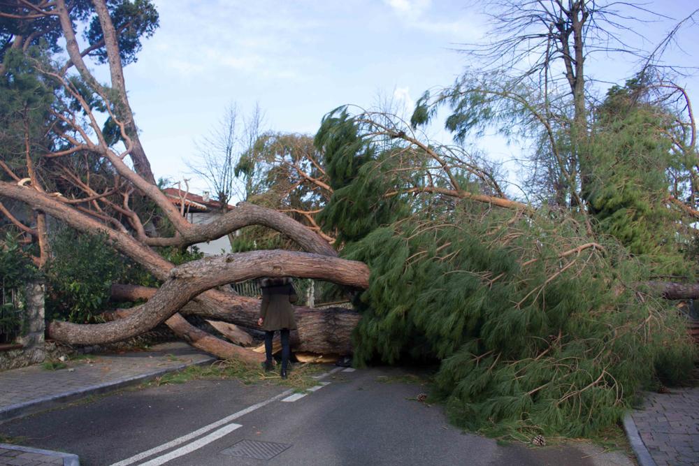 albero-caduto.jpg