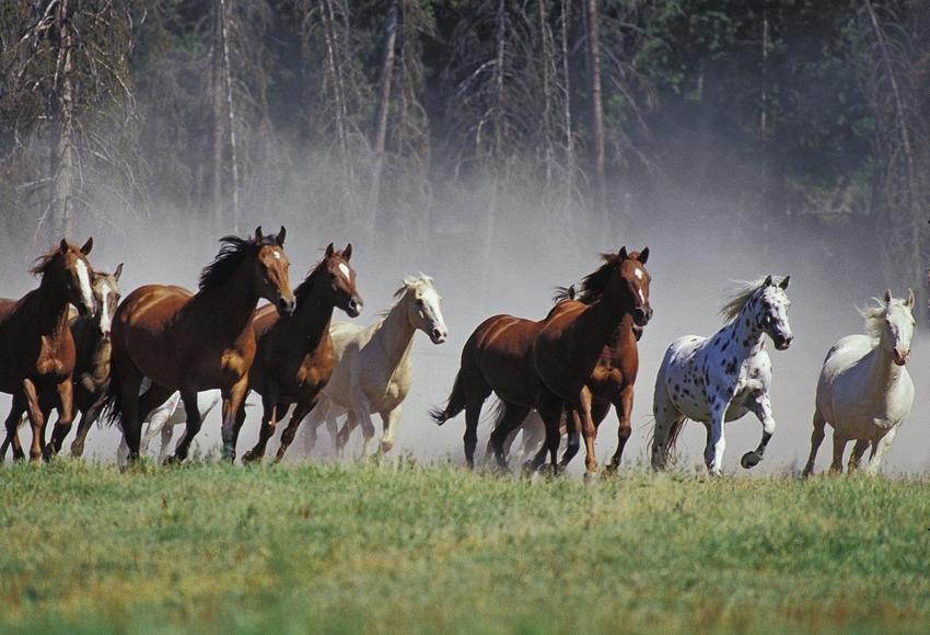 cavalli_selvaggi.jpg