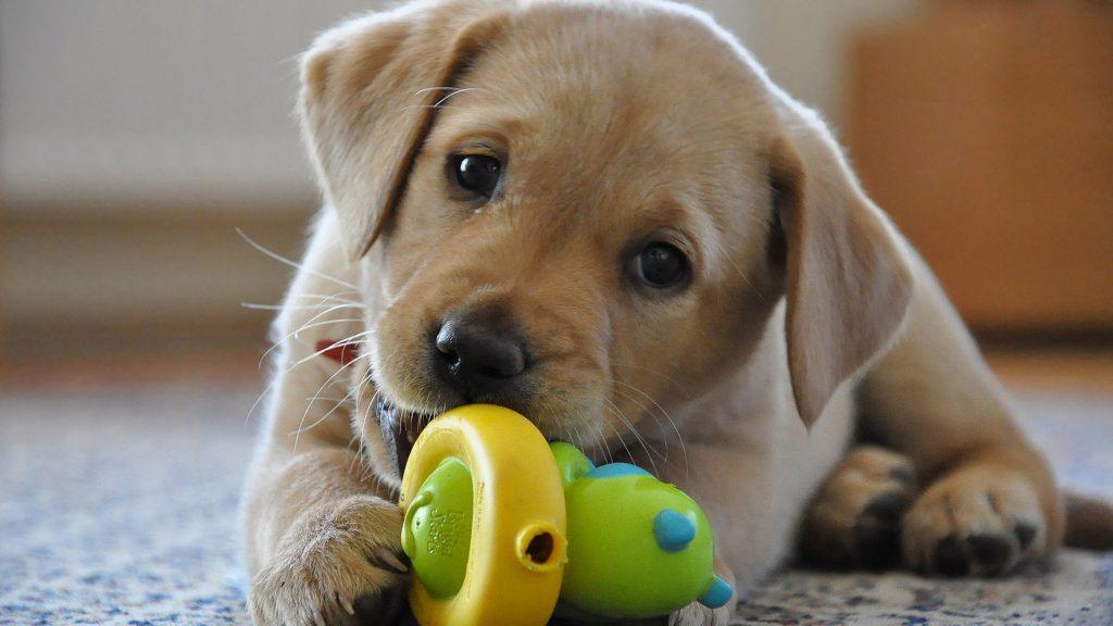 cucciolo-di-cane.jpg