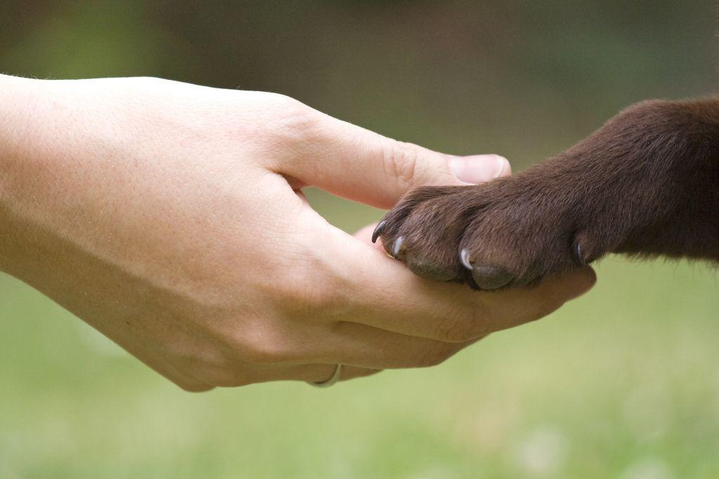 diritti_animali.jpg